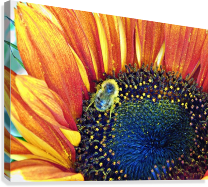 bee happy  Canvas Print