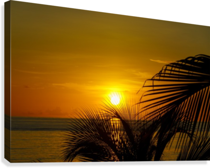 Sunrise at the palm tips  Canvas Print