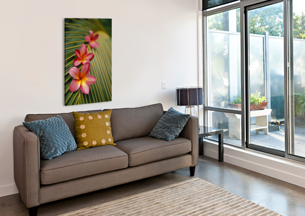 CLOSE-UP THREE PINK PLUMERIA FLOWERS ON COCONUT PALM LEAF SELECTIVE FOCUS PACIFICSTOCK  Canvas Print