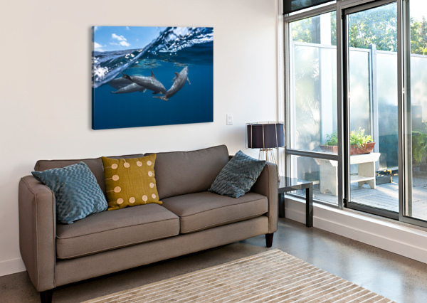 DOLPHINS 1X  Canvas Print