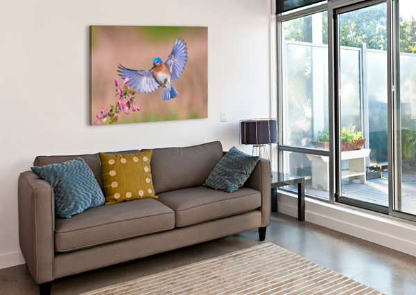 COLORFUL SPRING 1X  Canvas Print