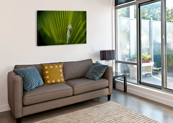 WHAT IS THAT 1X  Canvas Print