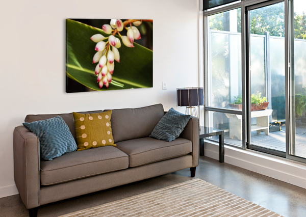 CLOSE-UP OF WHITE GINGER FLOWER ALPINIA; MAUI, HAWAII, UNITED STATES OF AMERICA PACIFICSTOCK  Canvas Print