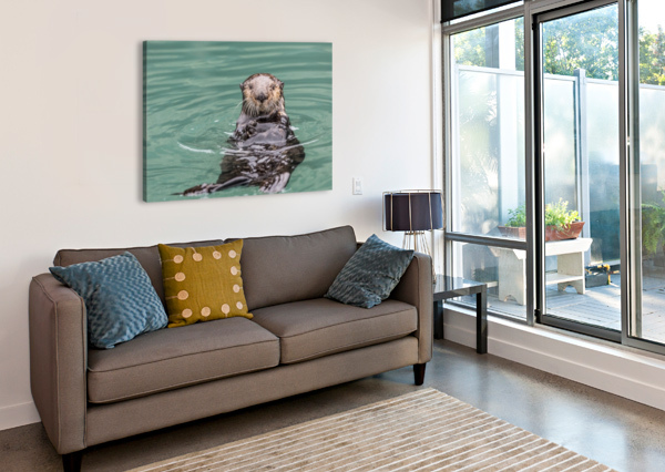 CLOSE-UP OF A SEA OTTER (ENHYDRA LUTRIS) FLOATING ON IT'S BACK, LOOKING TOWARDS THE CAMERA, SOUTH-CENTRAL ALASKA; SEWARD, ALASKA, UNITED STATES OF AMERICA PACIFICSTOCK  Canvas Print