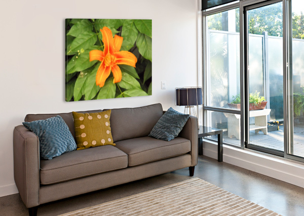 ORANGE LILLY 1 ARIZONA PHOTOS BY JYM  Canvas Print