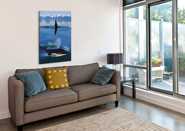 COMPOSITE: CLOSE UP OF ORCA WHALES AS THEY SURFACE IN LYNN CANAL WITH THE COAST RANGE MOUNTAINS IN THE BACKGROUND, INSIDE PASSAGE, SOUTHEAST ALASKA PACIFICSTOCK  Canvas Print