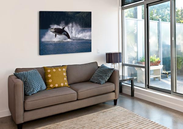 DOUBLE BREACHING ORCAS BAINBRIDGE PASSAGE PRINCE WILLIAM SOUND ALASKA SUMMER SOUTHCENTRAL PACIFICSTOCK  Canvas Print