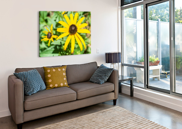 YELLOW CONE FLOWERS  MELODY ROSSI  Canvas Print