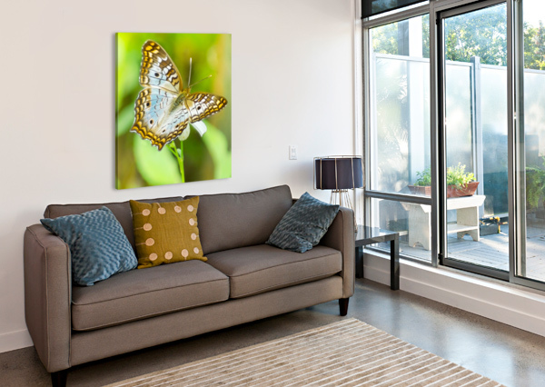 PSYCHEDELIC WHITE PEACOCK BUTTERFLY MELODY ROSSI  Canvas Print