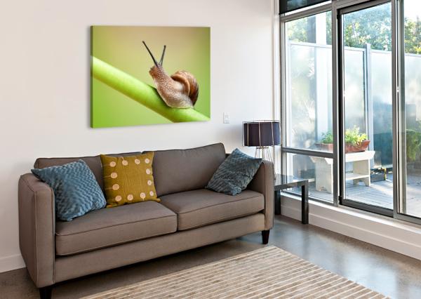 SNAIL ON GREEN STEM JOHAN SWANEPOEL  Canvas Print