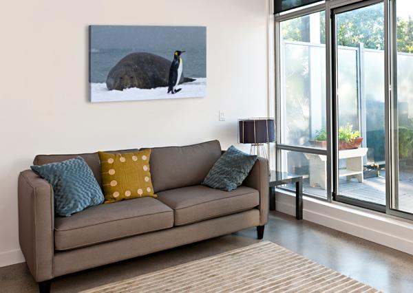 KING PENGUIN WALKING NEST TO ELEPHANT SEAL KAYE  Canvas Print