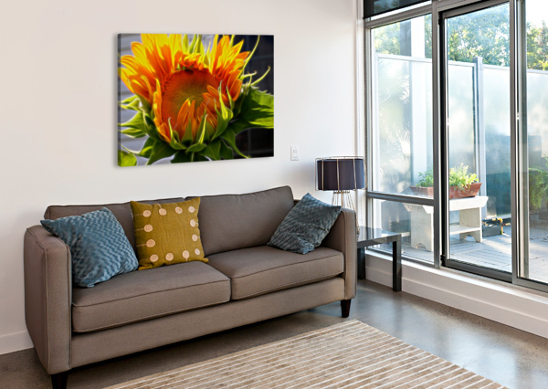 GLOWING SUN JACQUELINE SLETER  Canvas Print