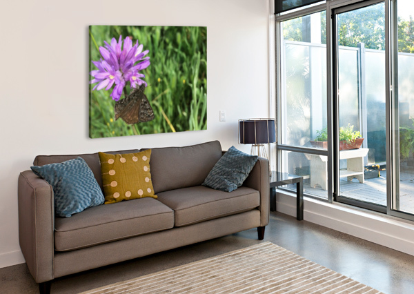 BUTTERFLY ON WILDFLOWER BEAR & BADGER  Canvas Print