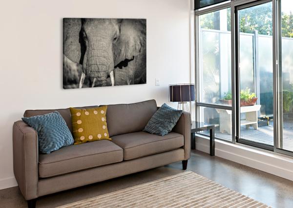 ELEPHANT PORTRAIT JADUPONT PHOTO  Canvas Print