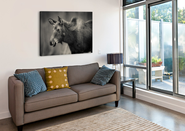 YOUNG MOOSE JADUPONT PHOTO  Canvas Print