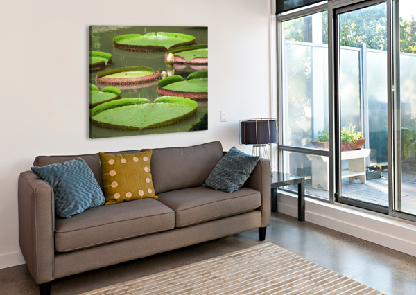 LILY PADS BEN CONWAY  Canvas Print