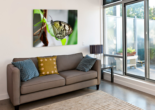RESTING BUTTERFLY BEN CONWAY  Canvas Print