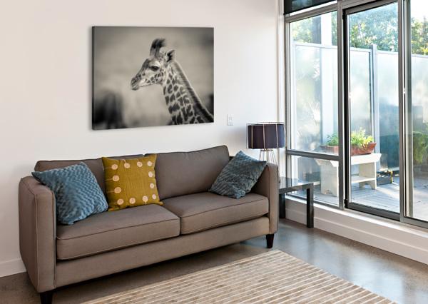 GIRAFE CALVE JADUPONT PHOTO  Canvas Print
