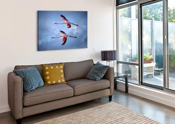 GREATER FLAMINGOS 1X  Canvas Print
