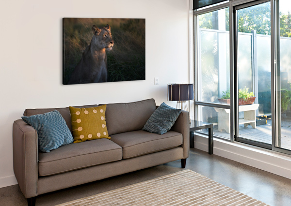 LIONESS AT FIRT DAY LIGTH 1X  Canvas Print