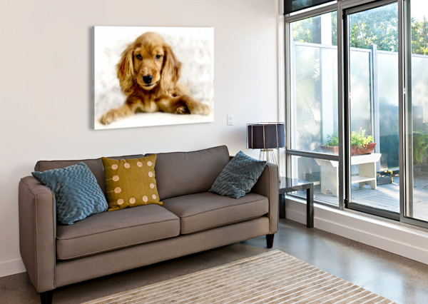 CUTE COCKER SPANIEL PUPPY BUSYBEE-CR PHOTOGRAPHY  Canvas Print