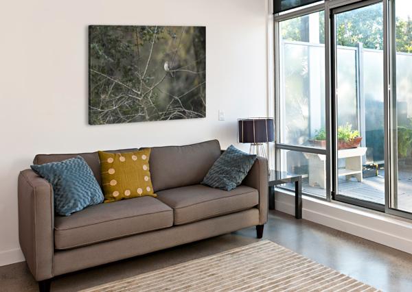 RESTING MOCKINGBIRD LAMBYSNAPS  Canvas Print