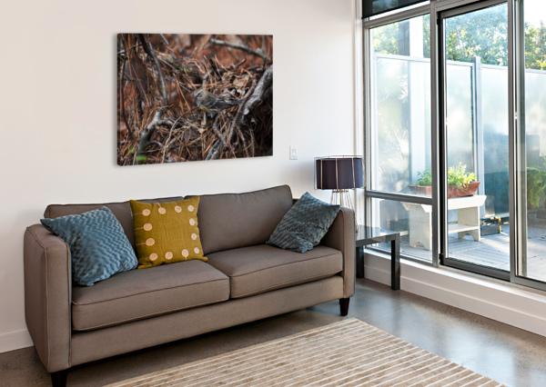 YELLOW-RUMPED WARBLER LAMBYSNAPS  Canvas Print