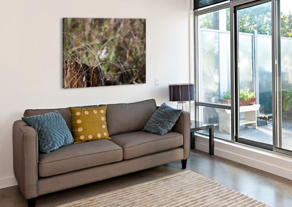 ANGRY MOCKINGBIRD 3 LAMBYSNAPS  Canvas Print