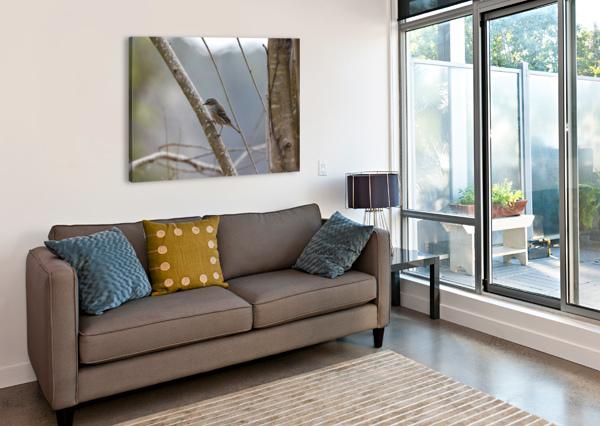 YELLOW-RUMPED WARBLER 4 LAMBYSNAPS  Canvas Print