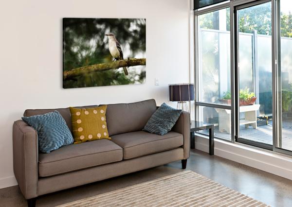 MOCKINGBIRD LAMBYSNAPS  Canvas Print