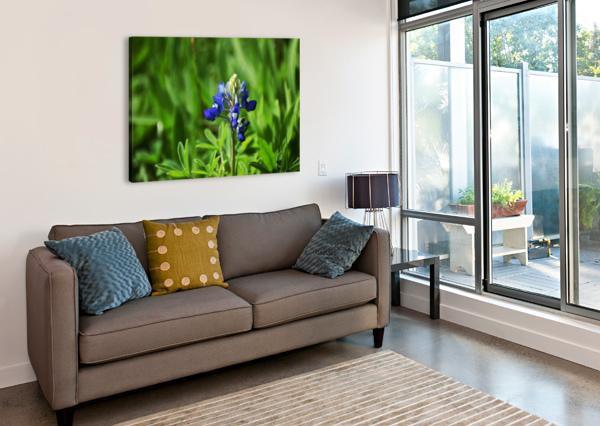 TEXAS BLUE BONNETS LAMBYSNAPS  Canvas Print