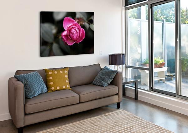 SINGLE ROSE LAMBYSNAPS  Canvas Print