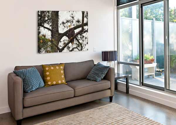 EAGLES LAMBYSNAPS  Canvas Print