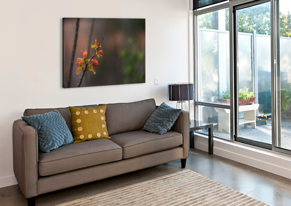 ORANGE BLOSSOMS LAMBYSNAPS  Canvas Print
