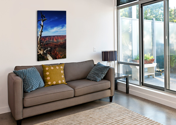 GRAND CANYON FRAMED BY TREE ALEXANDRA DRAGHICI  Canvas Print