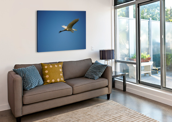 EGRET FLYING BRENT LUKE AUGUSTUS  Canvas Print