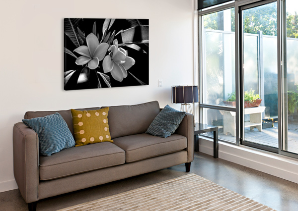PLUMERIA IN BLACK AND WHITE HH PHOTOGRAPHY OF FLORIDA  Canvas Print