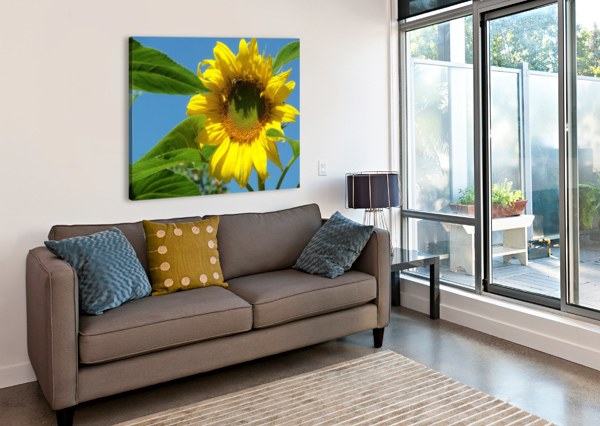 SUNFLOWER KEITH A LORETH  Canvas Print