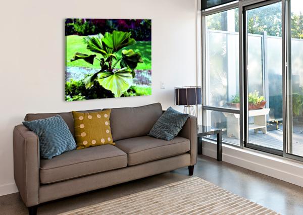 BO902 - LICUALA PELTATA LEAVES CLEMENT TSANG  Canvas Print