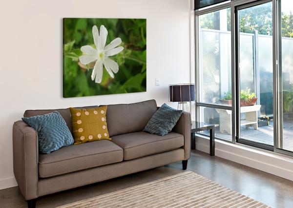 FLOWER SHOWER AMBER NORCROSS  Canvas Print