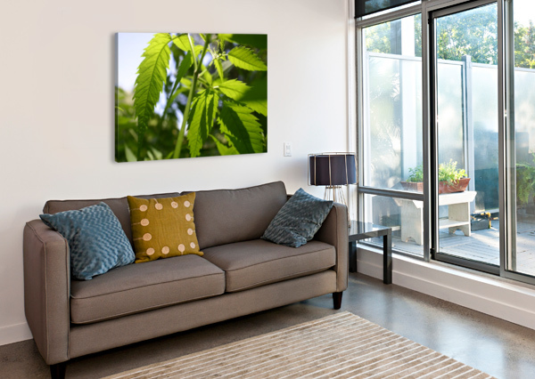 LEAF WITH LIGHT BC PHOTOGRAPHY  Canvas Print