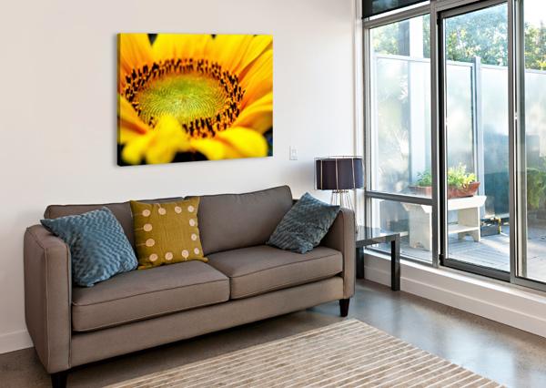 SUNFLOWER ANN SKROBOT  Canvas Print