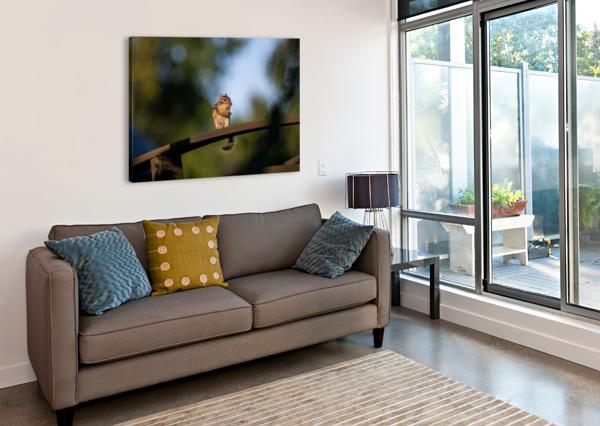 SQUIRREL BUNNOFFEE PHOTOGRAPHY  Canvas Print