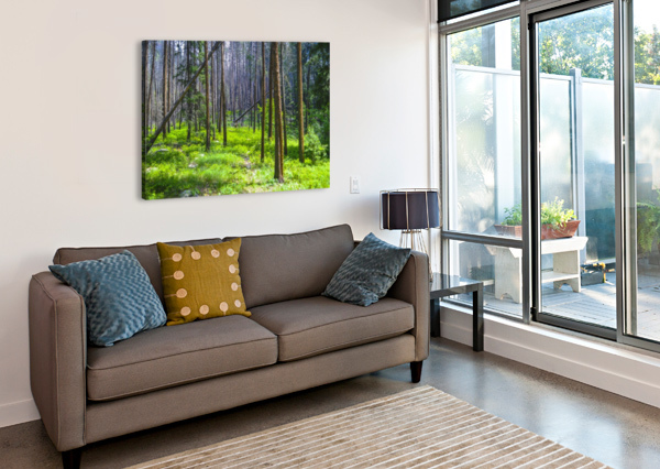 DENSITY SCENE AGAIN IMAGES: PHOTOGRAPHY BY CLIFF DAVIS  Canvas Print