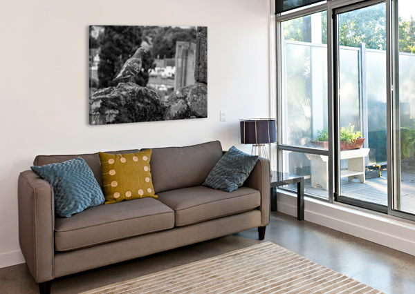 BLACK AND WHITE PIGEON BUNNOFFEE PHOTOGRAPHY  Canvas Print