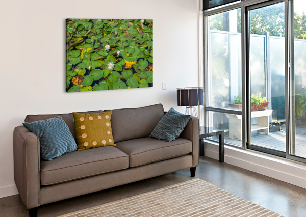LILY PADS  BUNNOFFEE PHOTOGRAPHY  Canvas Print
