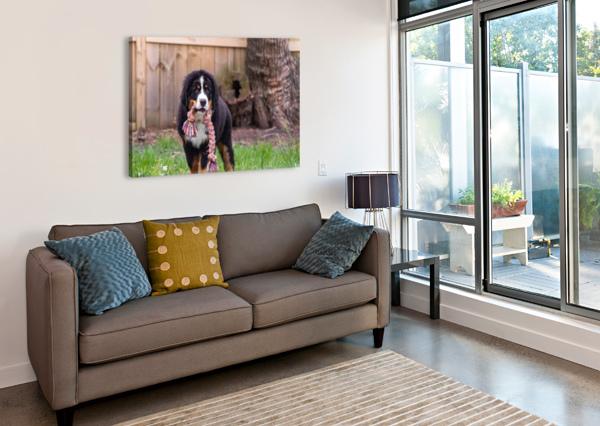BERNESE MOUNTAIN DOG PUPPY 8 JULES SIEGEL  Canvas Print