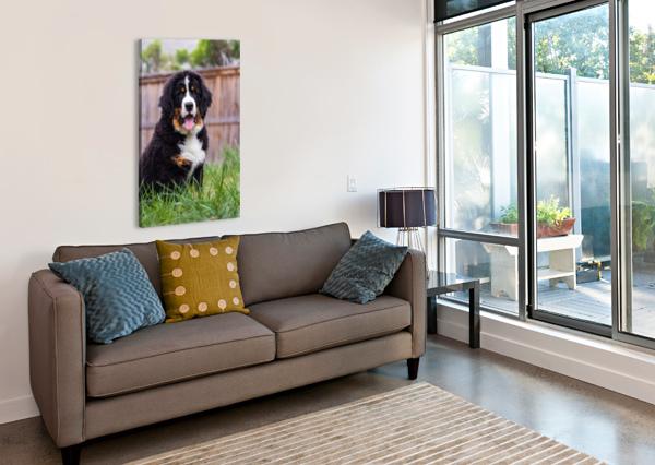 BERNESE MOUNTAIN DOG PUPPY 1 JULES SIEGEL  Canvas Print