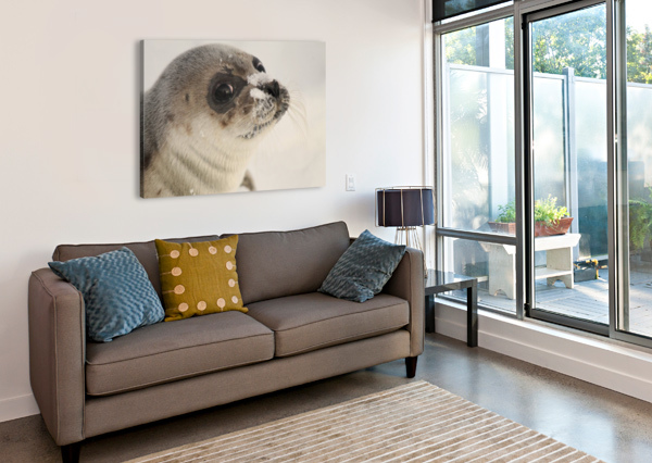 LRM_EXPORT_24334493503053_20191009_150407586 BRANDON COLLINS WILDLIFE PHOTOGRAPHY  Canvas Print