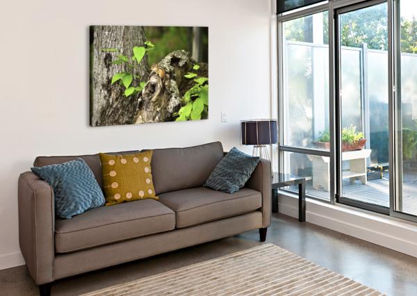 CHIPMUNK ON TREE CONNIE MAHER  Canvas Print